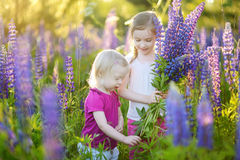 Two little sisters in blooming lupine field Stock Image