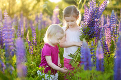 Two little sisters in blooming lupine field royalty free stock photo