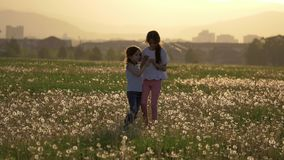 Two little sisters collect dandelion flowers and blows them in the wind blown. small Girls play have fun outdoors in glade. backgr. Two attractive little sisters stock footage