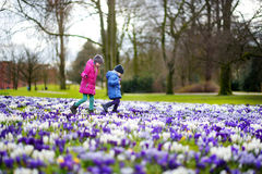 Two little sisters picking crocus flowers on beautiful blooming crocus meadow Royalty Free Stock Image