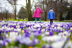 Two little sisters picking crocus flowers on beautiful blooming crocus meadow Royalty Free Stock Photos