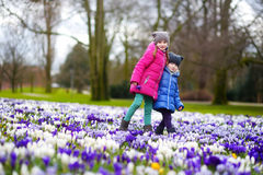 Two little sisters picking crocus flowers on beautiful blooming crocus meadow Stock Photos