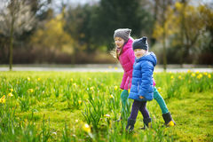 Two little sisters picking daffodil flowers on beautiful blooming daffodil meadow Royalty Free Stock Image