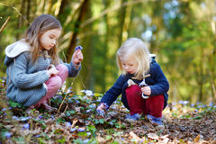 Two little sisters picking the first flowers of spring. On beautiful spring day royalty free stock photos