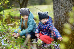 Two little sisters picking the first flowers of spring while hiking in the woods Stock Photo