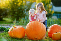Two little sisters playing with huge pumpkins Royalty Free Stock Images