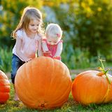Two little sisters playing with huge pumpkins Stock Photos