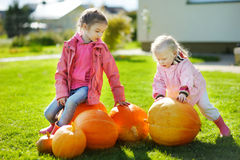 Two little sisters and some huge pumpkins Royalty Free Stock Photo