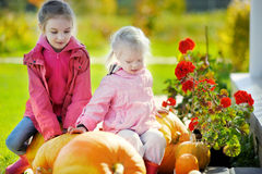 Two little sisters and some huge pumpkins Stock Photography