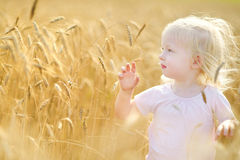 Two little sisters walking happily in wheat field Royalty Free Stock Images