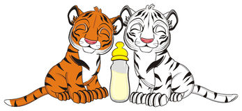 Two little tigers Stock Photo