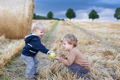 Two little toddler boys playing on straw field Stock Image