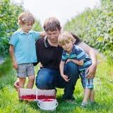 Two little twins kid boys and their dad on organic raspberry far Stock Photos
