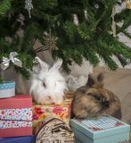 Two little rabbit sits under the Christmas tree Stock Image