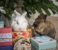 Two little rabbit sits under the Christmas tree Stock Images