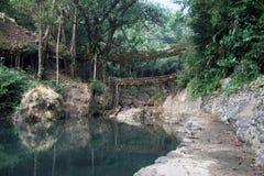 Two living root bridges in an outdoor scene Stock Photo