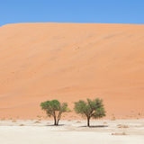 Two living trees in front of the red dunes of Namib desert Stock Photos