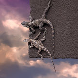 Two lizards on the edge of the roof Royalty Free Stock Photos