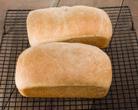 Two loaves of fresh baked bread Stock Image