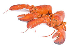 Two Lobsters Royalty Free Stock Images