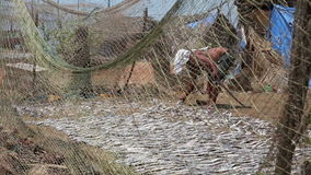 Two local people drying fish stock video