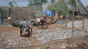 Two local people drying fish stock video footage
