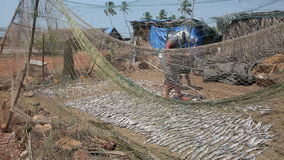 Two local people drying fish. Two local people, man and woman, drying fish on beach stock footage