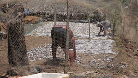 Two local people drying fish Stock Images