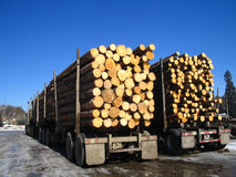 Two logging trucks along side of each other. A better look at the sizes of the logs piled in the semi trailer decks royalty free stock photo