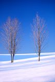 Two lone barren trees in the winter Royalty Free Stock Image
