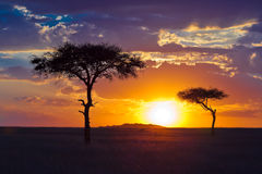 Two lone tree on a background of tropical sunset. Masai Mara Game Resrve, Kenya Stock Photography