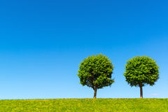 Two lonely tree on a green meadow Royalty Free Stock Photos