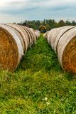 Autumn harvest of large round bales of hay in a row. stock photos