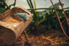 Two love birds in an aviary stock images