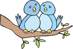 Two lovebirds on a branch Stock Photos