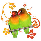 Two lovebirds Stock Photography
