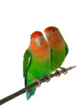 Two lovebirds Royalty Free Stock Photography