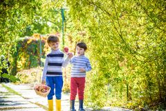 Two lovely boys stand with a basket with apples. Royalty Free Stock Photos