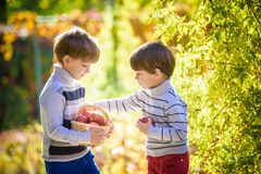 Two lovely boys stand with a basket with apples. royalty free stock image