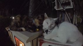 Two lovely cats. At night stock video footage