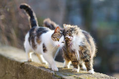 Two lovely cats on spring Stock Images