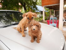Two lovely dog. They just were take a bath Royalty Free Stock Photos