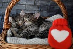 Two lovely kittens sleeping in a wicker basket stock photos