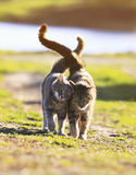 Two lovers cat walking on green grass next to a Sunny spring da stock images