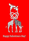 Two lovers giraffe Royalty Free Stock Image