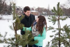 Two lovers walk in the winter park near the pines. Two lovers walk along the winter park near the pines. The couple is walking in the city park, against the Stock Photography