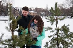 Two lovers walk in the winter park near the pines. Two lovers walk along the winter park near the pines. The couple is walking in the city park, against the Stock Photos