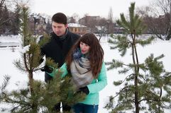 Two lovers walk in the winter park near the pines. Two lovers walk along the winter park near the pines. The couple is walking in the city park, against the Royalty Free Stock Photography
