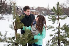 Two lovers walk in the winter park near the pines. Two lovers walk along the winter park near the pines. The couple is walking in the city park, against the Royalty Free Stock Images