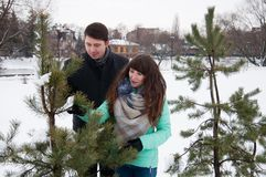 Two lovers walk in the winter park near the pines. Two lovers walk along the winter park near the pines. The couple is walking in the city park, against the Stock Images